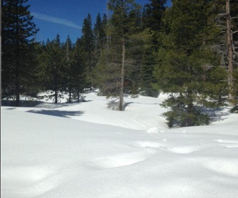 Untouched Snow in the California High Country